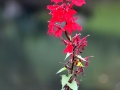 Fleurs 01132