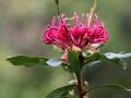 Fleurs 01153