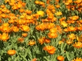 Fleurs 01120