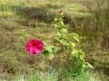 Fleurs 01134