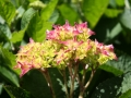 Fleurs 01138