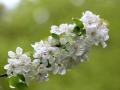 Fleurs 01151