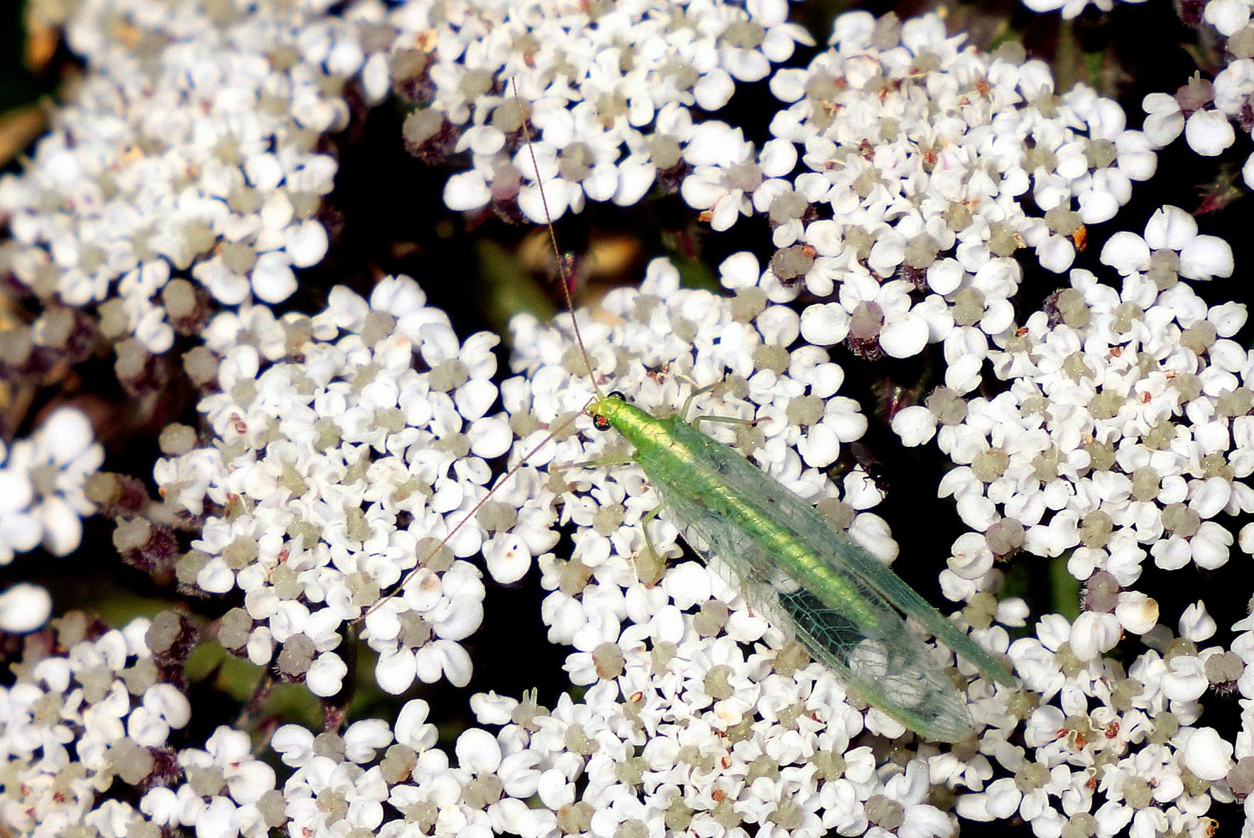 Insecte vert 14 06 17104 01